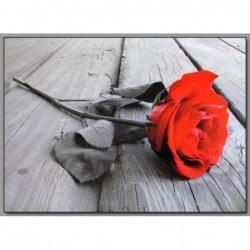 Dekorační obraz - Růže - 5070_0014