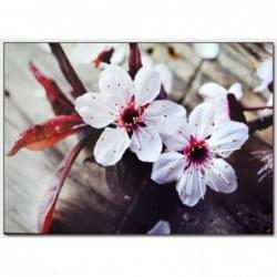 Dekorační obraz - Květiny- 5070_0026