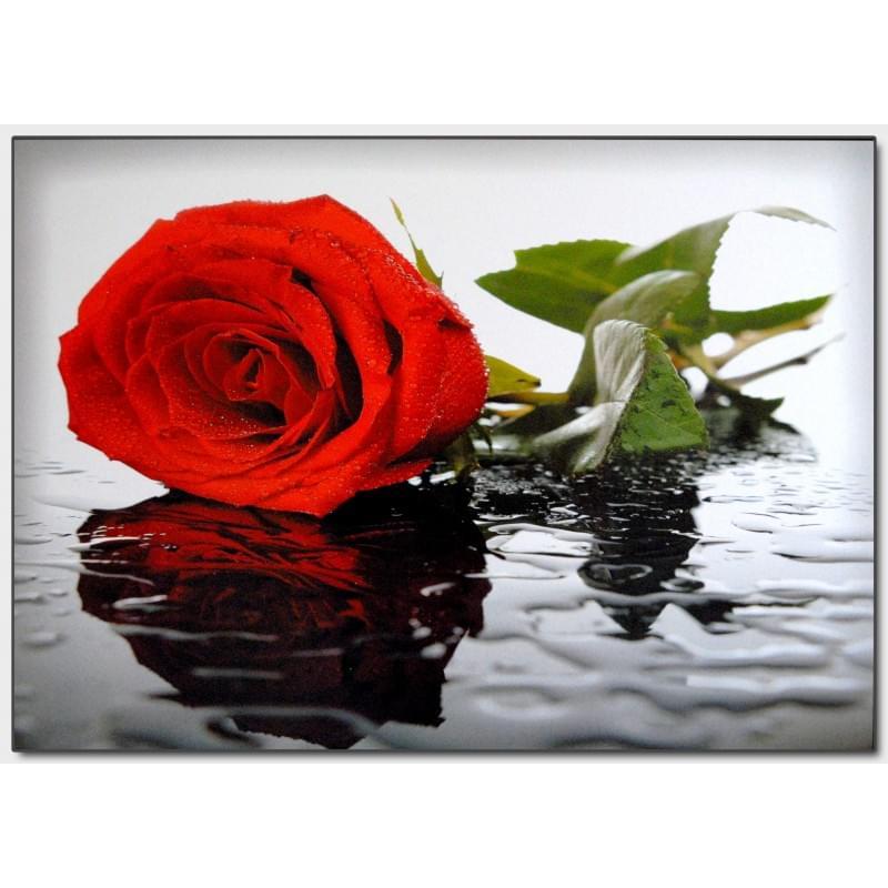 Dekorační obraz - Růže - 5070_0027