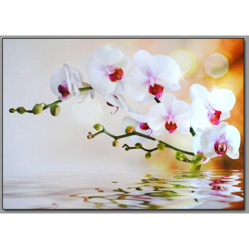 Dekorační obraz - Orchydeje - 5070_0029
