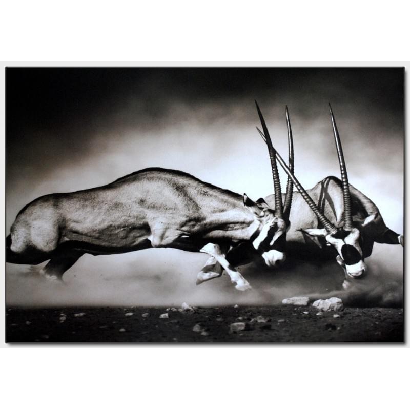 Dekorační obraz - Zvířata - 10070_0008